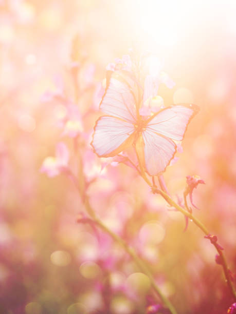 Beautiful butterfly with flowers stock photo