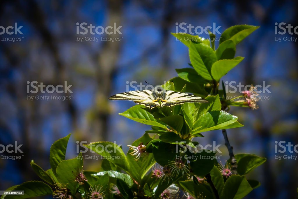 Beautiful butterfly with open wings on a green leaf stock photo