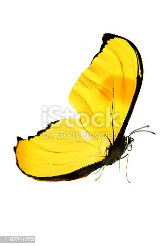istock beautiful butterfly with yellow wings and paws. isolated on white background 1162241223