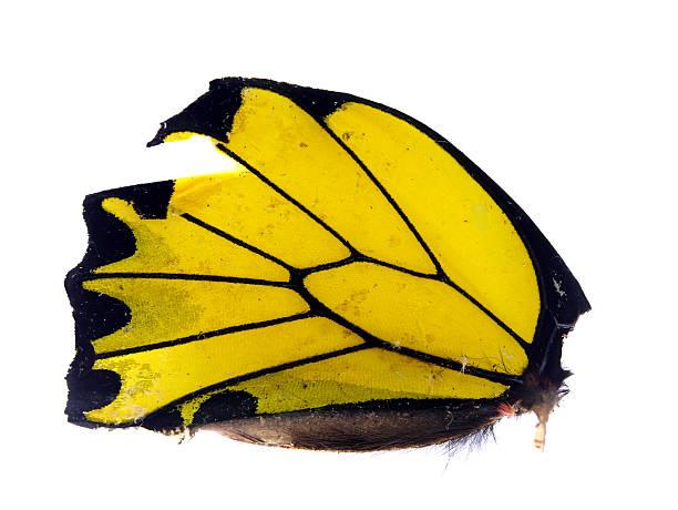 Beautiful butterflys wing picture id518625897?b=1&k=6&m=518625897&s=612x612&w=0&h=pidm3clrn4czz3l7owxcehdmfslbd1byvfcjevay5e0=