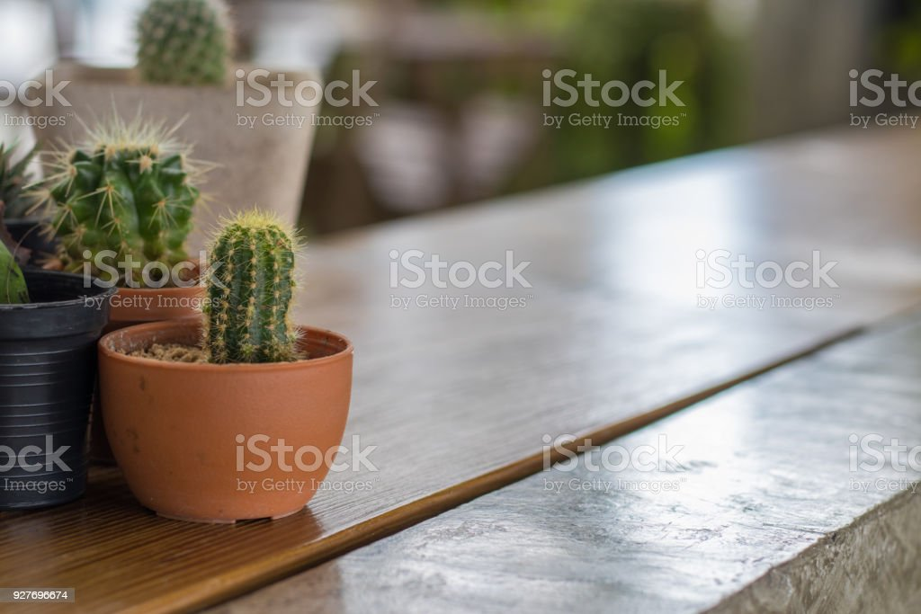 Beautiful Cactus In Pot For Home Decorate Mini Plant For Decor Stock