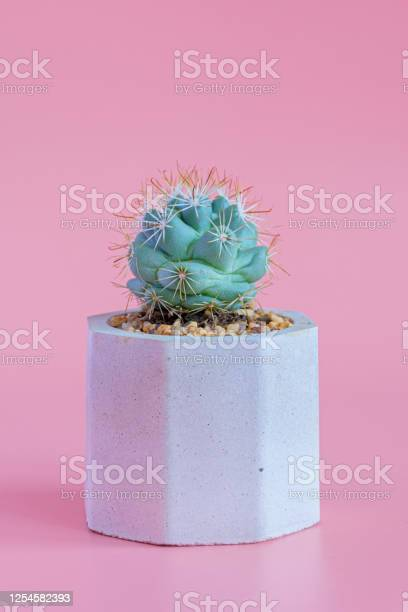 Beautiful cactus on pink paper background picture id1254582393?b=1&k=6&m=1254582393&s=612x612&h=xn7az3rjed3onrixr yyon8mg7h zscqht1ecskx vs=