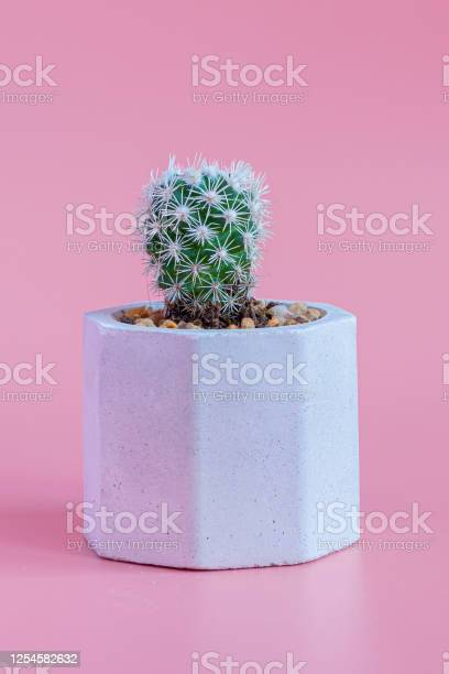 Beautiful cactus on pink paper background picture id1254582632?b=1&k=6&m=1254582632&s=612x612&h=n2e9y7eufqyjwr2alxbvbmtzungnm4zazzn4m45occa=