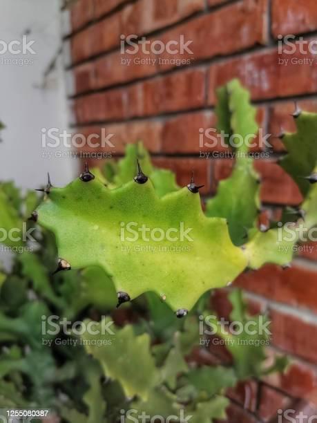 Beautiful cactus picture id1255080387?b=1&k=6&m=1255080387&s=612x612&h=zppm1uqgqrsbkj9g e17qeowiakespleqz9b1 niid4=