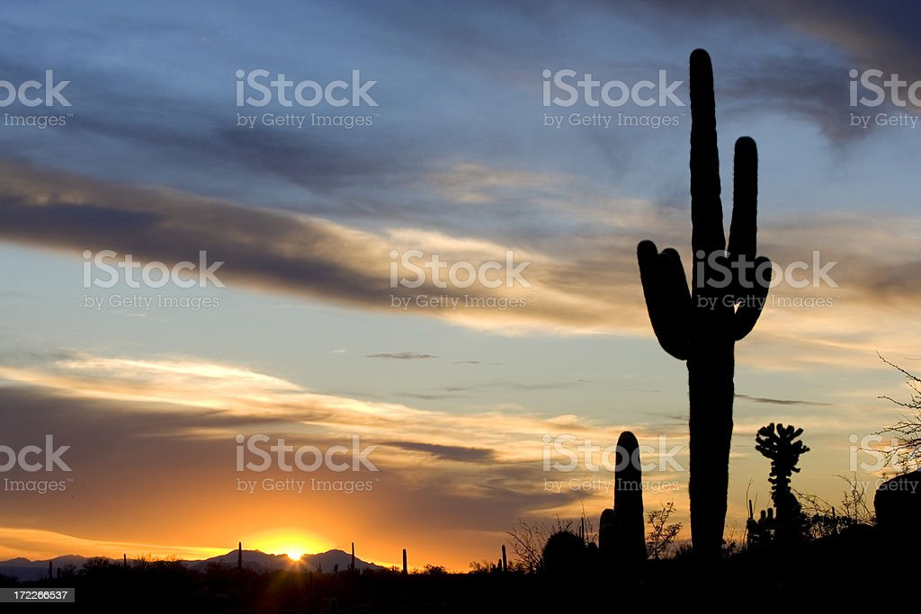 Beautiful cactus sunset royalty-free stock photo