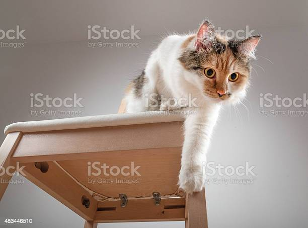 Beautiful calico cat jumping off a chair picture id483446510?b=1&k=6&m=483446510&s=612x612&h=gsyv06qznbgoyajfgg0ovueg9rfckb3tkks01s7trj4=
