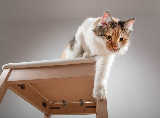 Beautiful calico cat jumping off a chair picture id483446510?b=1&k=6&m=483446510&s=612x612&w=0&h=t4k7iovfyqgdgm smzlb8h3tny86txrorq89h5kp6ku=