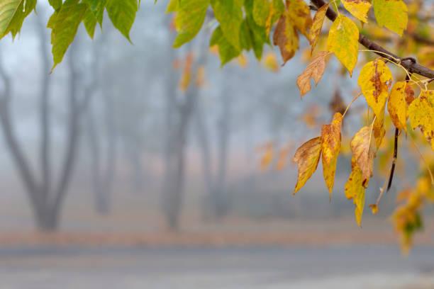 Beautiful calm misty autumn park yellow leaves frame stock photo