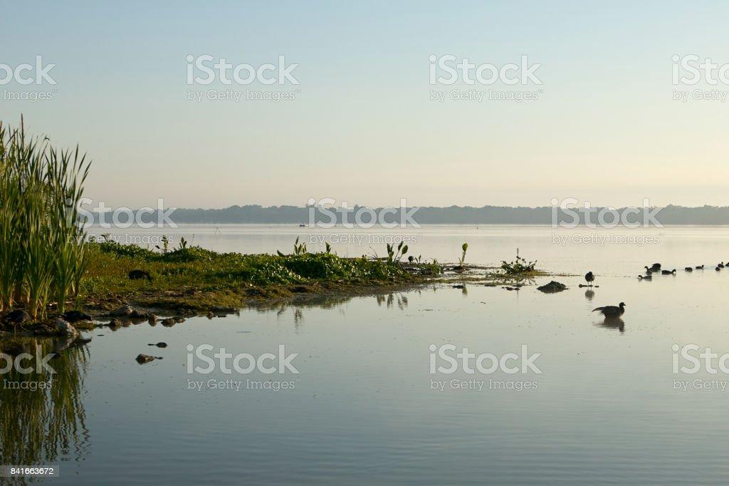Beautiful calm morning lake and waterfowl stock photo