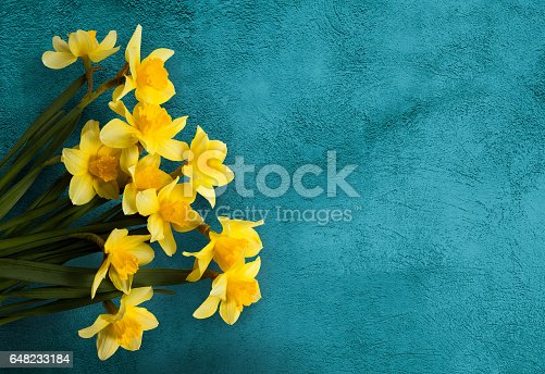 istock Beautiful Card with Yellow flowers jonquils 648233184