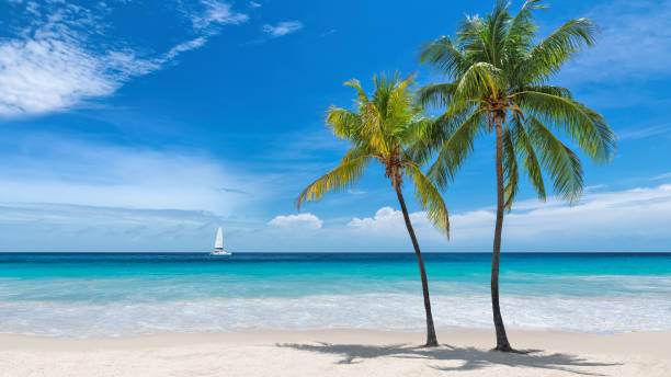 Beautiful caribbean beach picture id1184827463?b=1&k=6&m=1184827463&s=612x612&w=0&h=le78dakwjw4zxxbvbytjbejdb5lvyu nwhws53tp0uq=