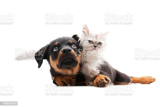 Beautiful cat and dog picture id165820520?b=1&k=6&m=165820520&s=612x612&h=i tkqtr0t2bjeev10mpwnwlqf o jqacxwmrzb2wxte=