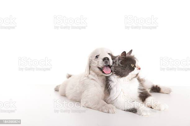 Beautiful cat and dog picture id184395824?b=1&k=6&m=184395824&s=612x612&h=i6ckulhwdjdn7wxzcjlggrfa2yge8ddammxhh2azyfm=
