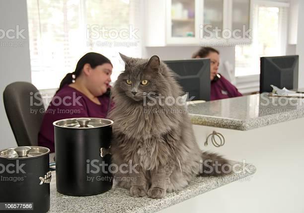 Beautiful cat at a vets reception picture id106577586?b=1&k=6&m=106577586&s=612x612&h=mpk7gdbd3pj7sronyysviwithwc0nxs0kw4b022j9t8=