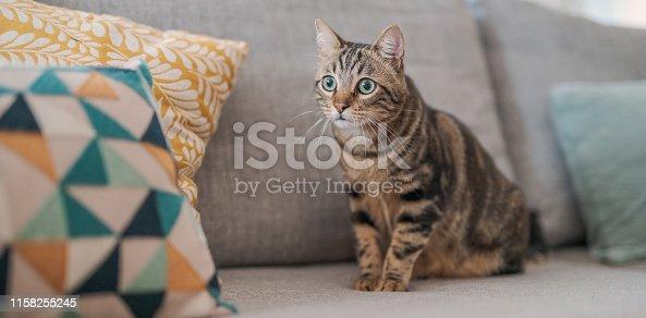 istock Beautiful cat at home 1158255245