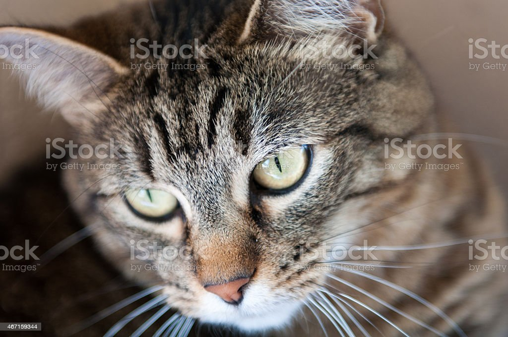 Schöne Katze Ungestellt – Foto