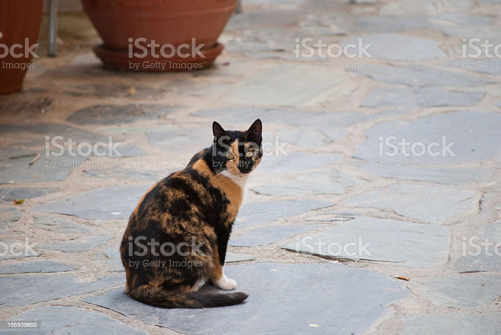 Beautiful cat in Chania stock photo