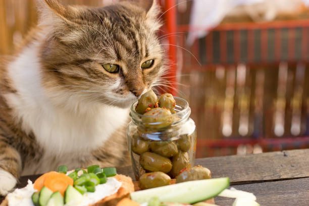 Beautiful cat knows what is healthy food a healthy diet picture id1183548034?b=1&k=6&m=1183548034&s=612x612&w=0&h=litlnbxxvn gjypgthcv6bnevrr6gnf7zk13iyi zho=