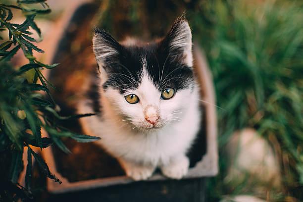 Beautiful cat look at the camera stock photo