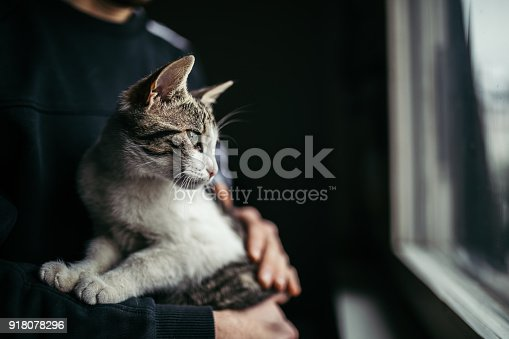 Beautiful cat in arms of her owner standing by the window at home.