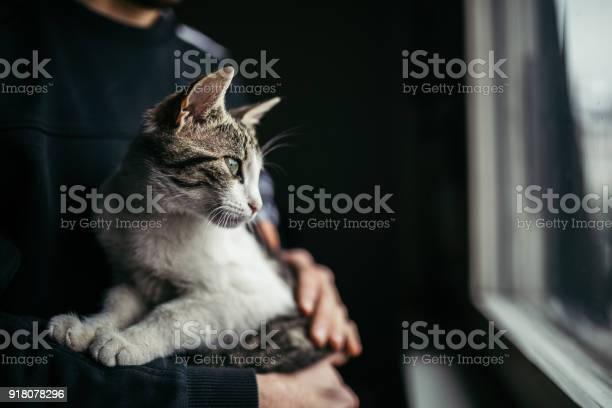 Beautiful cat looking through window picture id918078296?b=1&k=6&m=918078296&s=612x612&h=s2oldgi5hct7dclc87dwb p erxpj6v3znq30neen6u=