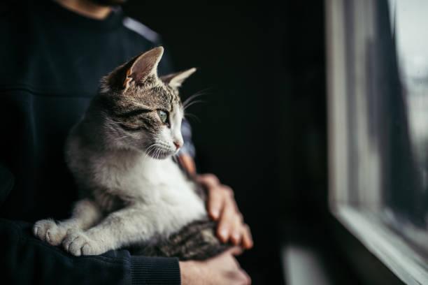 Beautiful cat looking through window picture id918078296?b=1&k=6&m=918078296&s=612x612&w=0&h=8frpowqwztblokzxmxppxi8rsolnzfurqjnbjhlzlmm=