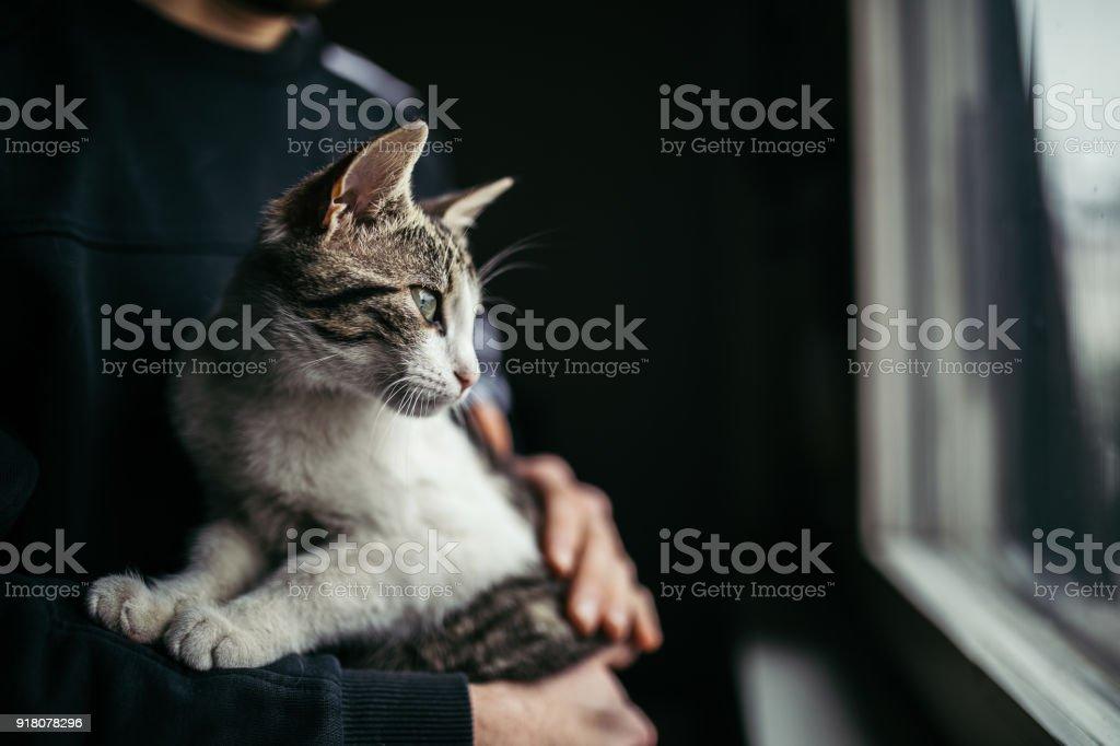 Beautiful cat looking through window stock photo