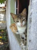 Beautiful cat on a balcony in a rural area of Guatemala