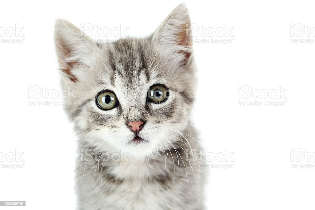 Beautiful cat on a white background stock photo