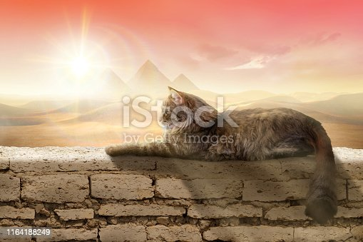 Composition with a furry cat resting on a wall against beautiful background.