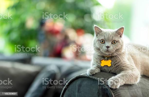 Beautiful cat picture id1169399691?b=1&k=6&m=1169399691&s=612x612&h=3wmdknq0gpmu9kgu38su wctwytbjikeeyca1kvrauc=
