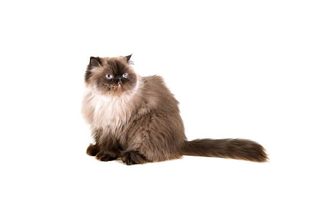 Beautiful cat picture id155141252?b=1&k=6&m=155141252&s=612x612&w=0&h=w2 evqssoo7zvg7vcxrjatl916ltsjhacvyx5qq3sgy=