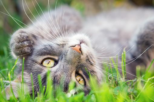 Красивая Кошка — стоковые фотографии и другие картинки 2015