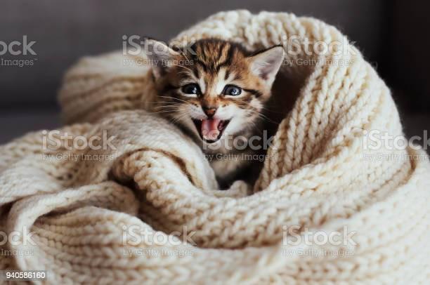 Beautiful cat picture id940586160?b=1&k=6&m=940586160&s=612x612&h=0rdlusfk4vfixronaz2er ldhs1t6w3a2agsla3ri6k=
