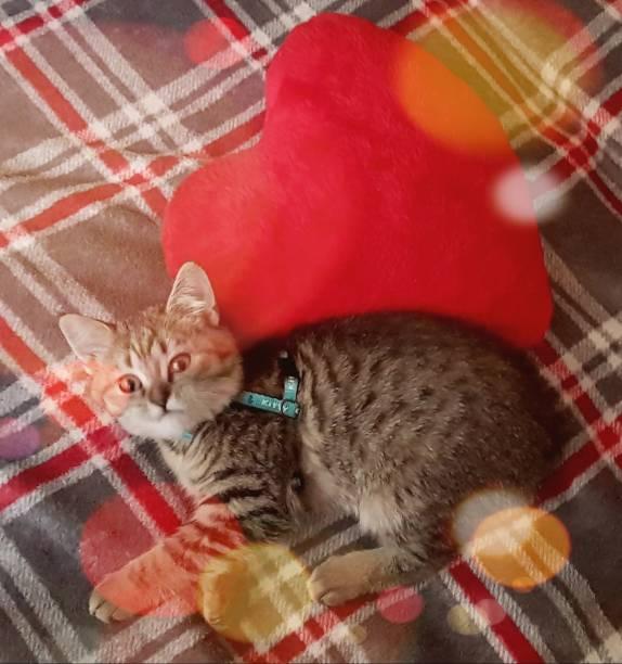 Beautiful cat picture id969084842?b=1&k=6&m=969084842&s=612x612&w=0&h=nbcxahvfdoagnqid2fsseeeymcpgweh1wvevdez5o u=