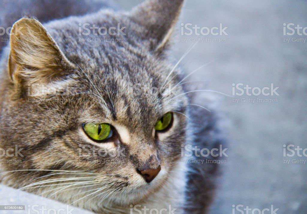 Beautiful cat стоковое фото