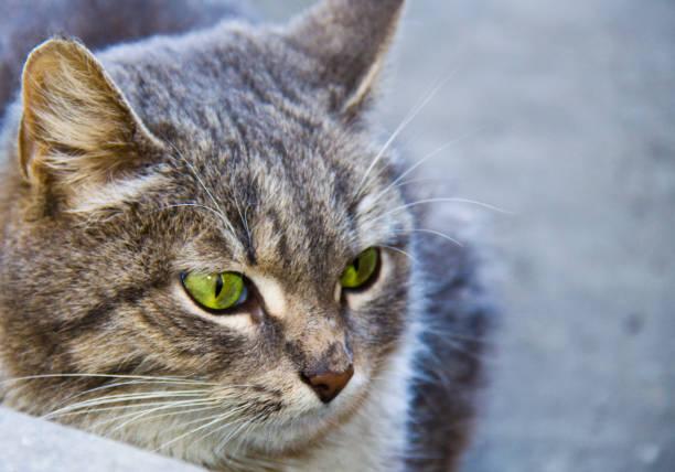Cтоковое фото Beautiful cat