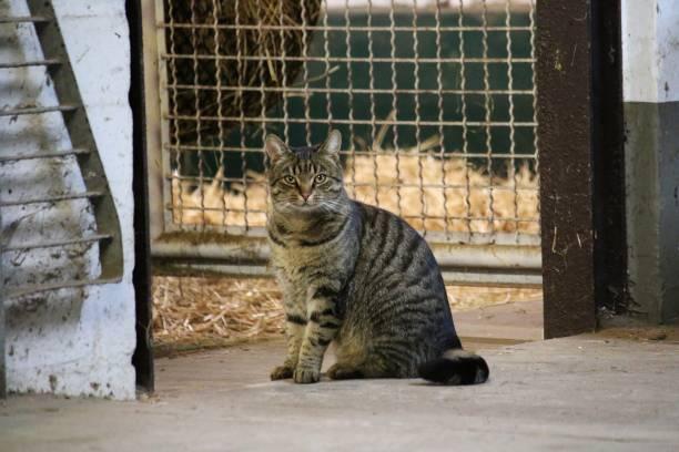 beautiful cat portrait in the barn stock photo