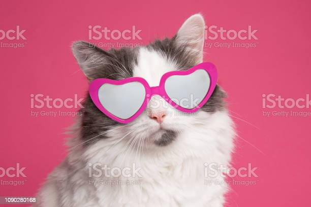Beautiful Cat Portrait On Pink In Heart Glasses Stock Photo - Download Image Now