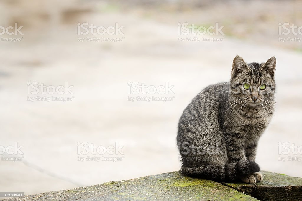 Beautiful cat sitting and watching royalty-free stock photo