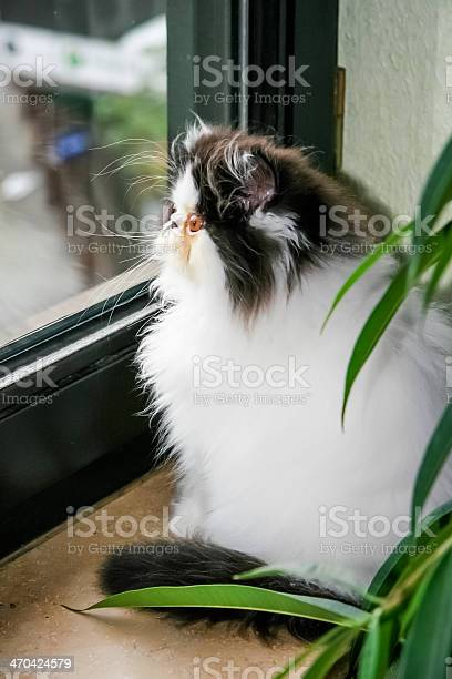 Beautiful cat sitting on the window picture id470424579?b=1&k=6&m=470424579&s=612x612&h=nsu48un4enyxsfj84gk8adoatvhbgs7mtcuuefftef0=