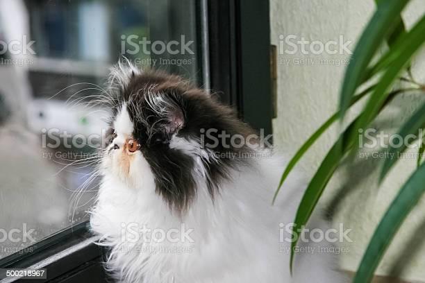 Beautiful cat sitting on the window picture id500218967?b=1&k=6&m=500218967&s=612x612&h=hrms0npc5bbfzwxnnmzdi 2pdm9gswzfab0kot427gk=