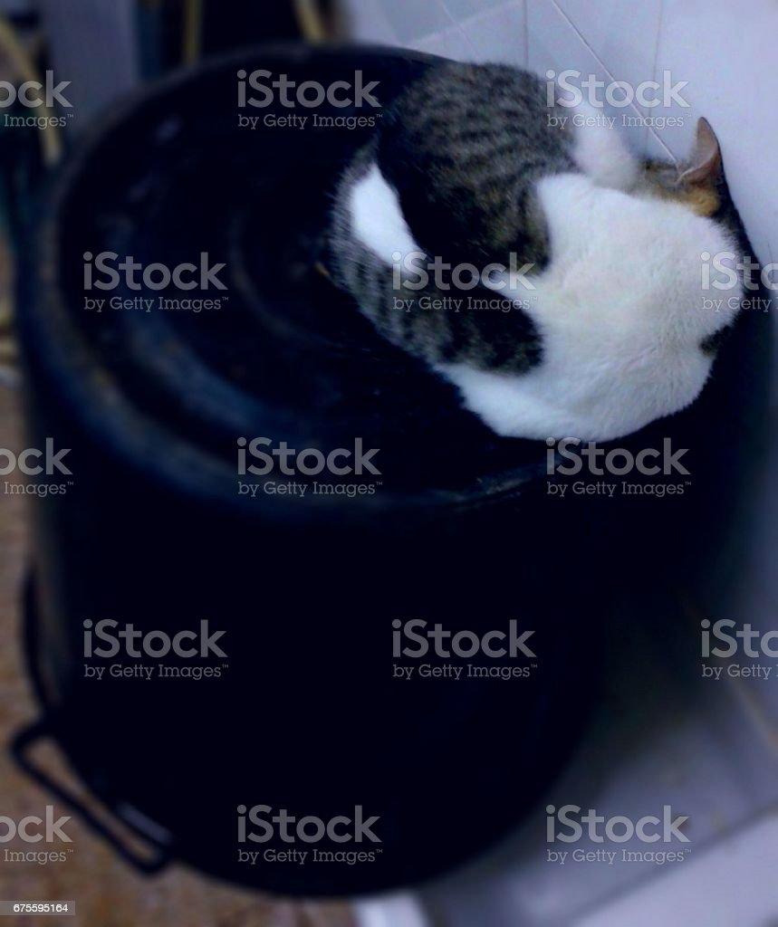 Beautiful cat sleep on the bucket photo libre de droits