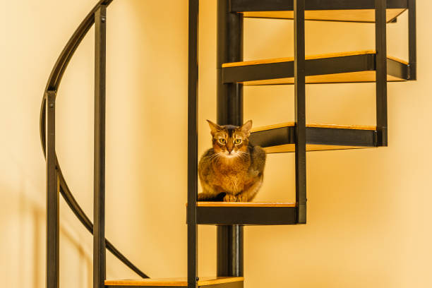beautiful cat standing in the kitchen - haustier treppe stock-fotos und bilder