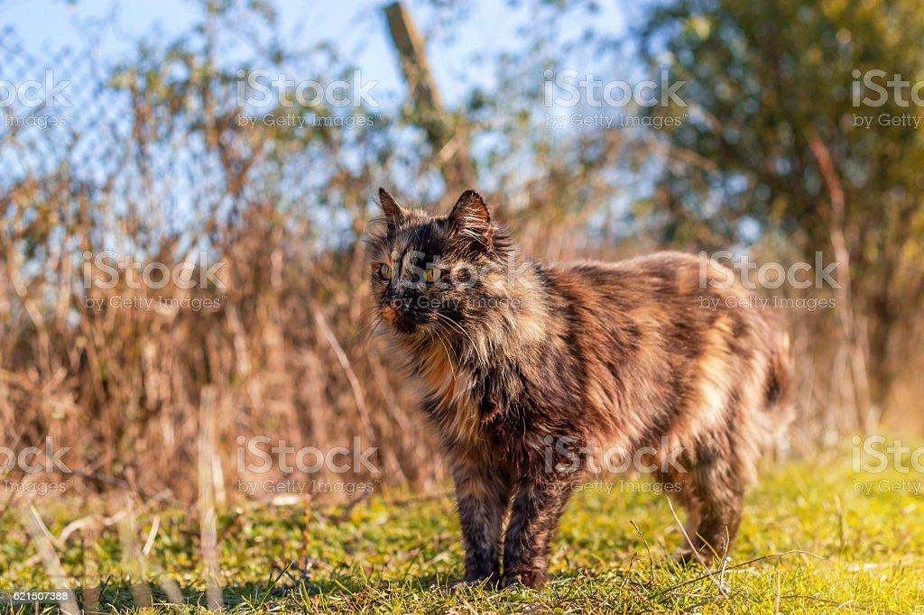 Beau chat marche en automne photo libre de droits