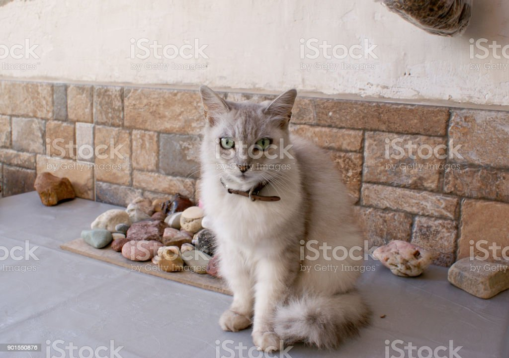 Beautiful cat with white fur, colorful stones stock photo
