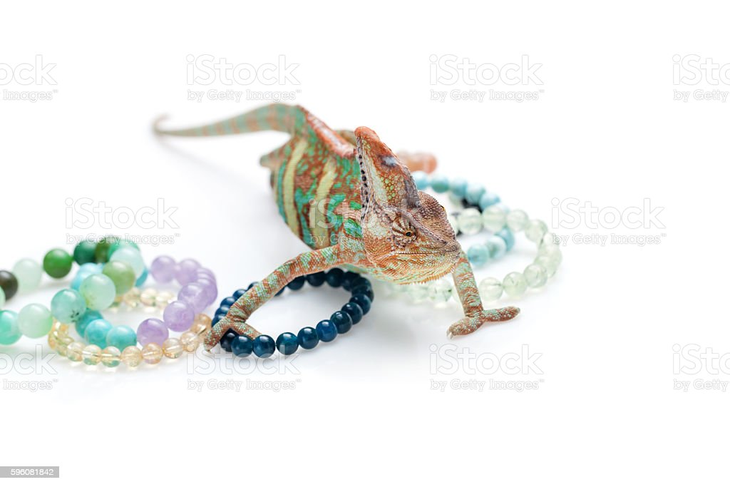 Beautiful chameleon with natural stone bracelets royalty-free stock photo