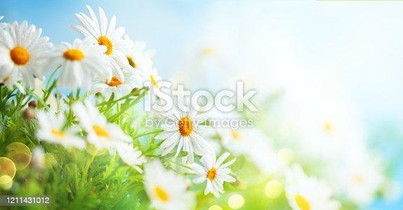 678639336 istock photo Beautiful chamomile flowers in meadow. 1211431012