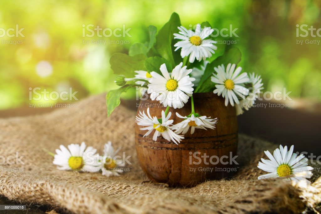 Beautiful chamomile flowers in rough rustic wooden bowl on sackcloth. Background sun light nature scene with blooming medical chamomiles. stock photo
