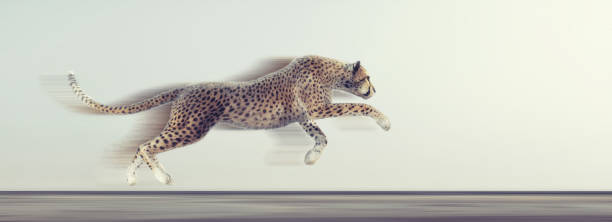 Beautiful cheetah running on white background this is a 3d render picture id1089728880?b=1&k=6&m=1089728880&s=612x612&w=0&h=fdw6 4zbjllxznf7cydbawbcz3stkhwtg3gencsunkc=